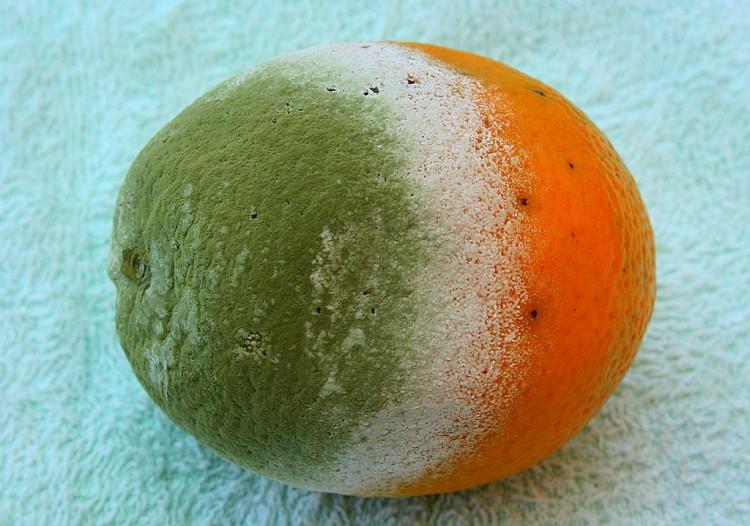 Candidatura laranja será considerada fraude